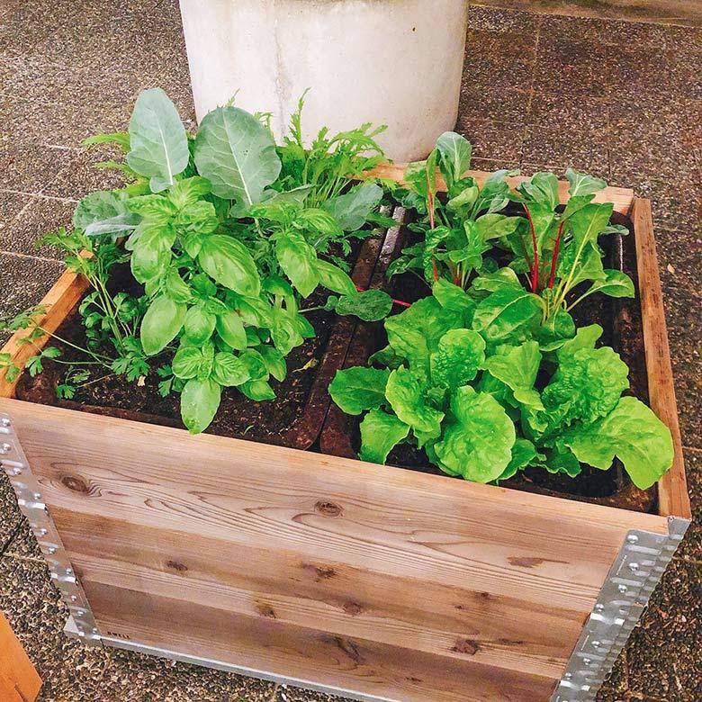 家庭菜園の進化形「コンテナファーム」