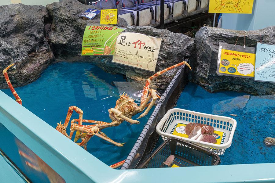 東三河で人が集う繋がる場<br>竹島水族館